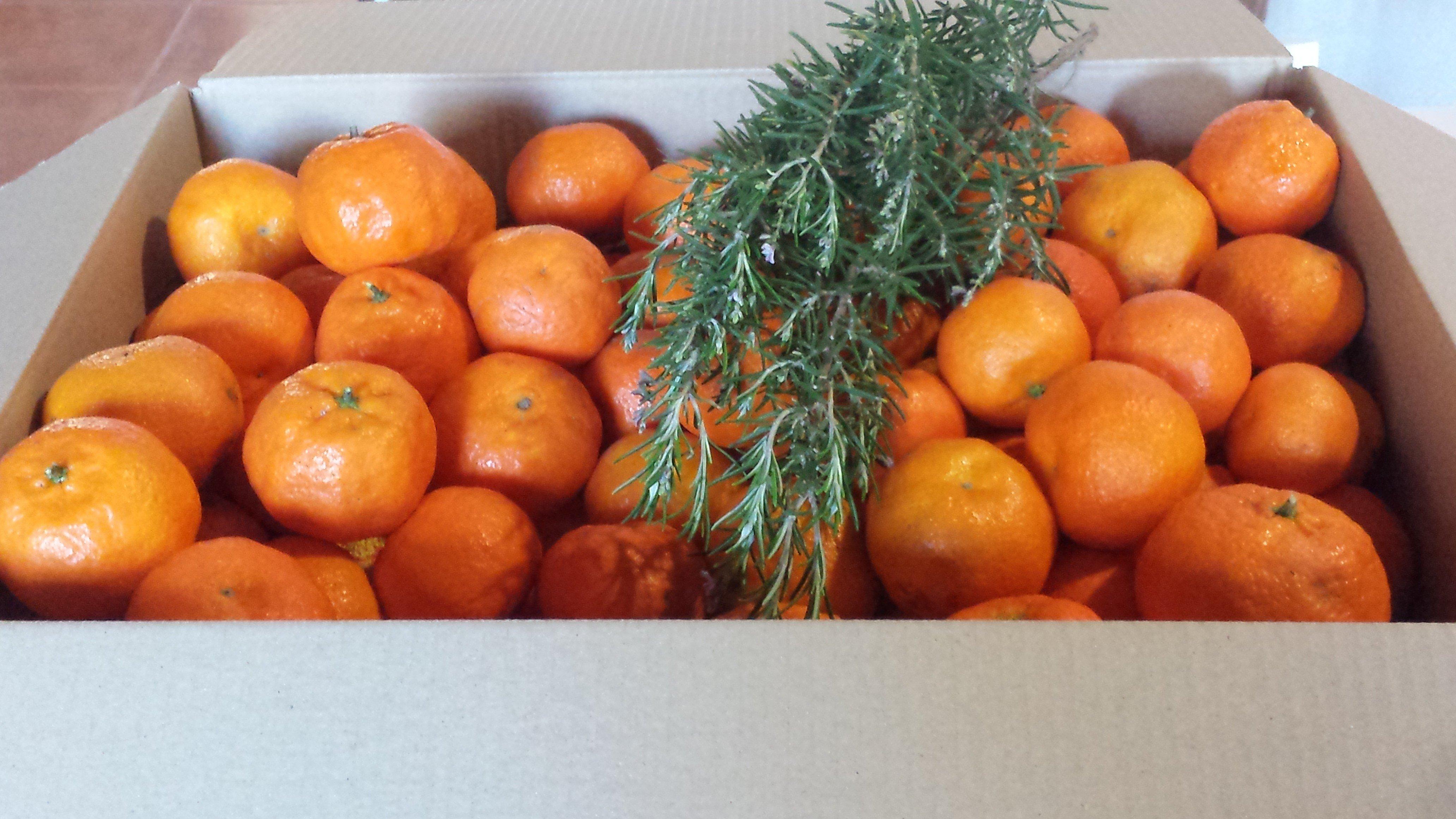 caja de clementinas - Cajas de clementinas Ibiza