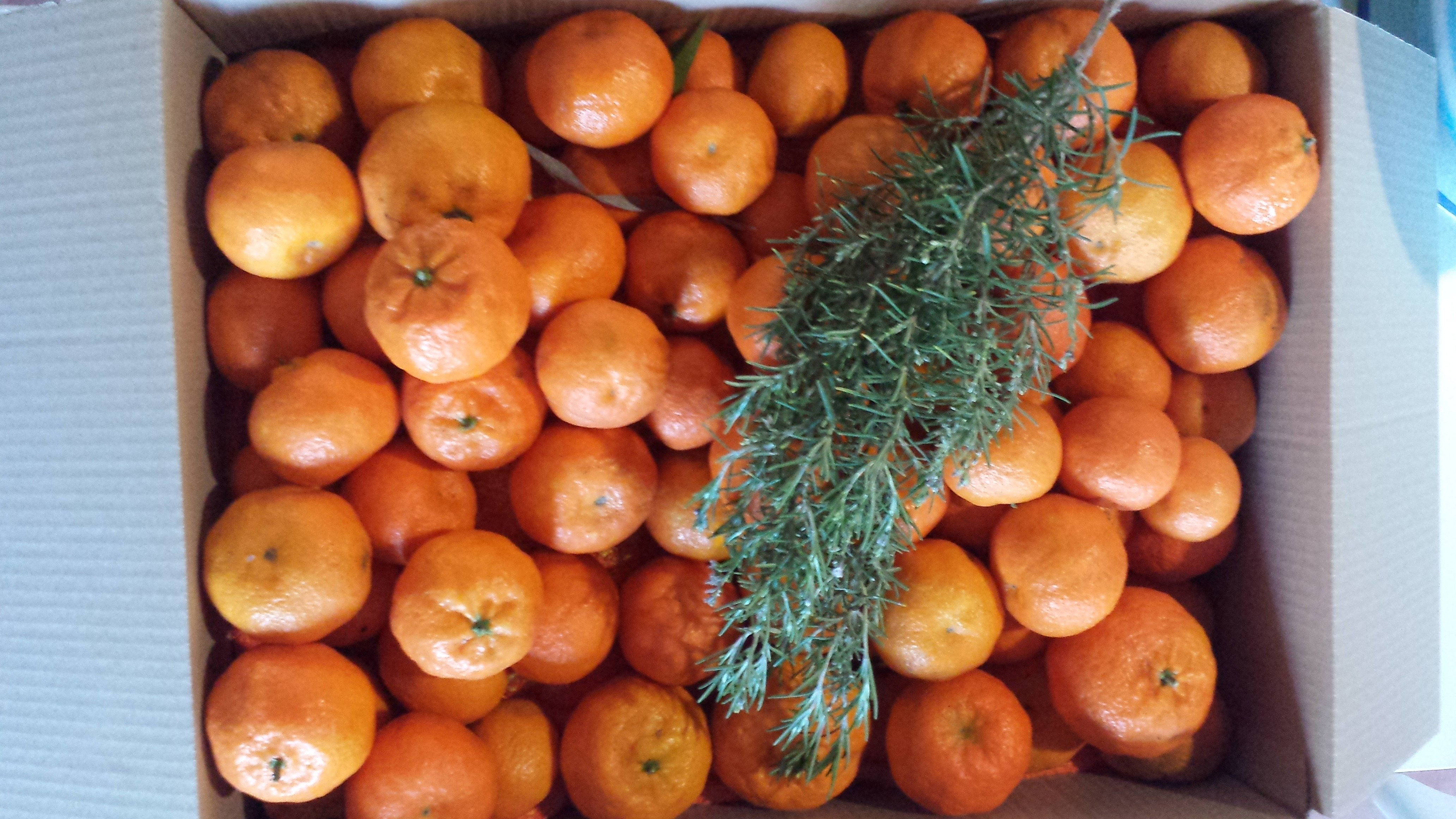 caja de clementinas2 - Cajas de clementinas Ibiza
