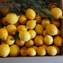 caja-de-limones2-213x213