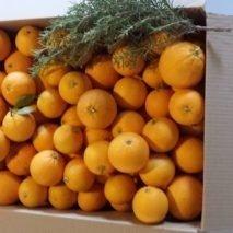naranjas-zumo-213x213