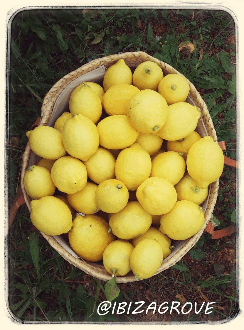 cesta de limones - Cajas de limones Ibizagrove